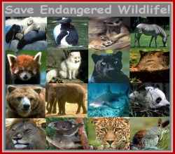Save Our Exotics!!!